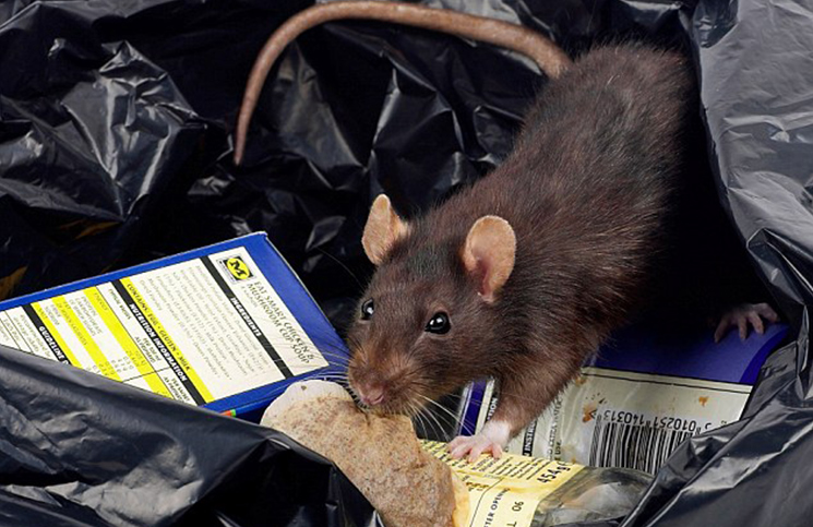 LASSA FEVER: WHAT YOU SHOULD KNOW